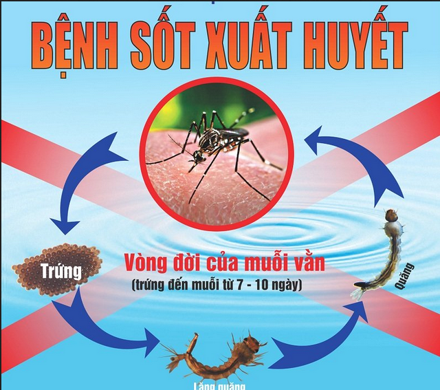 mau-in-to-roi-sot-xuat-huyet